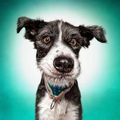 Funny (Dog) Faces – Erblicken.com