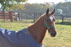 Mister Champagne, Tonic's half bro; shortly before he passed away....