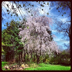 Backyard #backyard #trees #homerglen #il - @judyo53- #webstagram