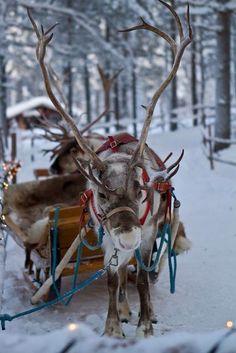 Santa's sleigh and reindeers. #PANDORAloves