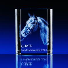 Horse in glasscube