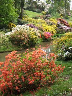 Leonardslee Gardens - love spring flowering shrubs by water
