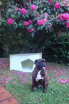 Que contenta está Cata con su casita!