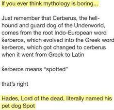 lolz online - If You Ever Think Mythology Is Boring… Greek Mythology Humor, Greek And Roman Mythology, Percy Jackson Memes, Percy Jackson Fandom, Hades Percy Jackson, All Meme, Stupid Memes, Meme Chat, Greek Memes