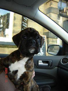 What a cute puppy!
