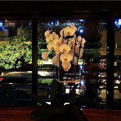 Kiku garden at Psychiko Restaurant Bar, Athens, Aquarium, Greece, Japanese, Garden, Goldfish Bowl, Greece Country, Garten
