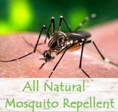 All Natural Essential Oil Mosquito Repellent | The Wise Wife