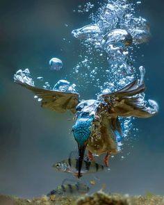 Underwater Photography, Wildlife Photography, Animal Photography, Underwater Photos, Action Photography, Fishing Photography, Inspiring Photography, Photography Photos, Lifestyle Photography
