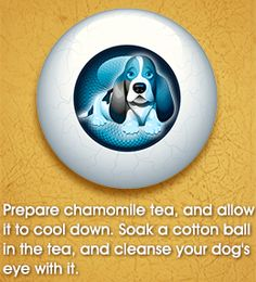 Dog Eye Infection Home Remedies