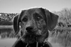 Harley at the lake