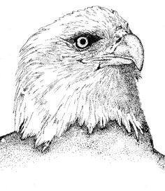 stippling | Stippling - Bald Eagle
