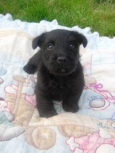 Biscotti puppy by yoyo bee, via Flickr