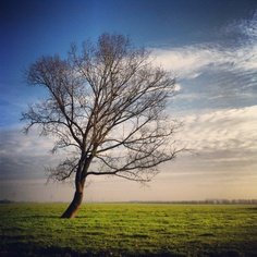 #lonely_tree #hardinxveld