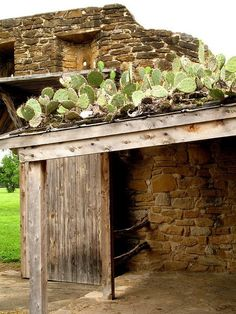 You know how cactuses like to pretend they are tough and don't whine for water every 3 minutes? It's been summer for quite some time now Natural Building, Green Building, Outdoor Projector, Simple Wallpapers, Backyard, Patio, Ship Lap Walls, Garden Design, Deco