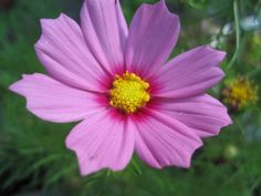 Anun Askareet: Vielä kukkii Plants, Plant, Planets