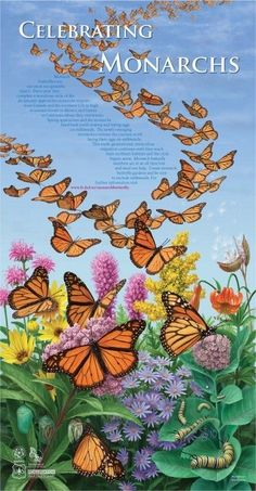 monarch butterfly educational and conservation resources  http://monarchjointventure.org/resources/publications/