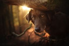 woman creates enchanting portraits of dogs in the austrian wilderness 17