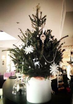 Christmas 2013 Christmas Tree, Restaurant, Holiday Decor, Home Decor, Teal Christmas Tree, Decoration Home, Room Decor, Diner Restaurant, Xmas Trees