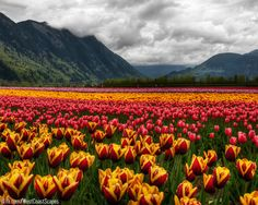 Firefield in Agassiz, Beautiful British Columbia, Canada