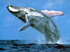 Whale Watching Samana Bay | Punta Cana Tours and Excursions