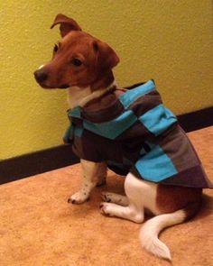DIY dog hoodie with recycled sweater