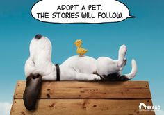 Adoption Campaign Taps Iconic Animals