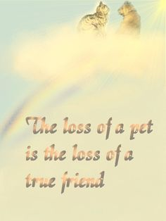 The loss of a pet is the loss of a true friend.