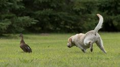 "8 Steps to Teaching Your Dog a Super-Strength ""Leave It"" Command 