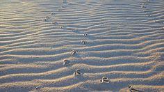 Little footprints Little Footprints, See The Sun, New Zealand, Surfing, Paradise, Surf, Surfs Up, Surfs, Heaven