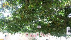 모아베리농장