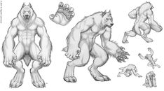 Werewolf Design Page by kyoht.deviantart.com on @DeviantArt - The frontal drawing makes me giggle. He's just standing there so placidly.  ----  (I had my glasses off when I first looked at this & thot it was an x-rated were wolf!  LOL) jd