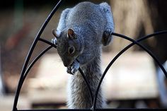 squirrel tales........
