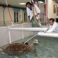 """Sarà utilizzata la struttura delle' ex macello di Portici. La Stazione Zoologica Anton Dohrn trasferirànel porto del Granatello anche il """"Turtle Point"""""""