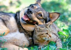 Why dogs actually love cats #dogs #pets #dog #cute #animals #puppy