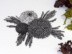 Flora Illustrations by Sasha Prood, via Behance