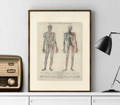 Human Blood Vessel Art Print C.1900 Antique Engraving - Wall Art, Home Decor…