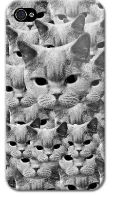 Cat... Cat everywhere.