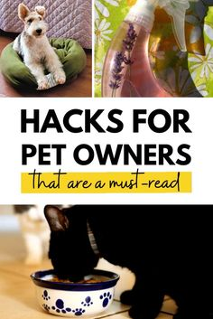Do you have a dog? Check out these easy pet hacks - perfect for puppies too! Cucumber melon DIY dog treats, best dog beds, pet-hair removal tips, and more!