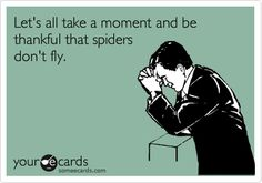 Let's all take a moment and be thankful that spiders don't fly.