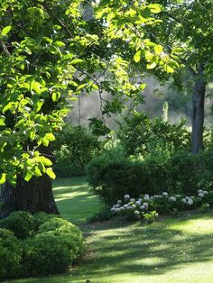 garden in provence