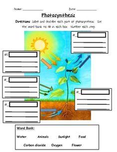 Photosynthesis - 3rd Grade