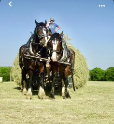 Big Horses, Work Horses, All About Horses, Shire Horse, Cattle Farming, Clydesdale, Draft Horses, Horse Drawn, Horse Farms