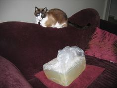Bailey and a big block of soap