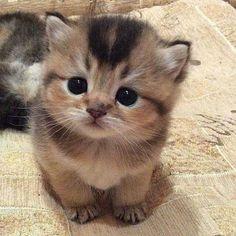 Cutie;)