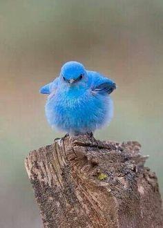 Grappige vogel