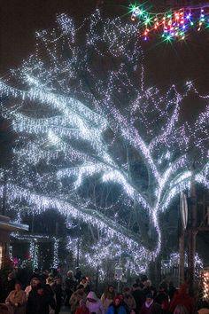 Cincinnati Zoo and Botanical Gardens - PNC Festival of Lights