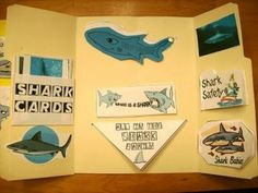 Shark Lapbook