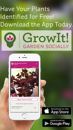 Download the Free GrowIt! app today to have your plants identified by the community around you. Connect with other local gardeners and plant enthusiasts to swap secrets and maybe even trade seeds. Join the community today. Available on the App Store and Google Play.