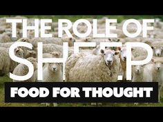 The Role of Sheep - One for the Vegan (and other) Followers Out There