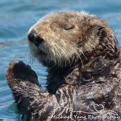 (259) Sea Otter Channel